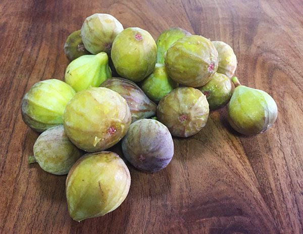 fresh picked figs photo